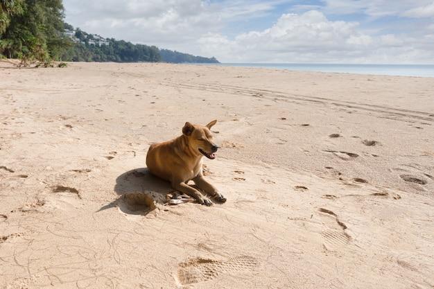 Close-up cachorro dormindo na praia, tailândia