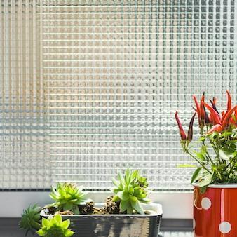 Close-up, cacto, vermelho, pimenta, potted, plantas
