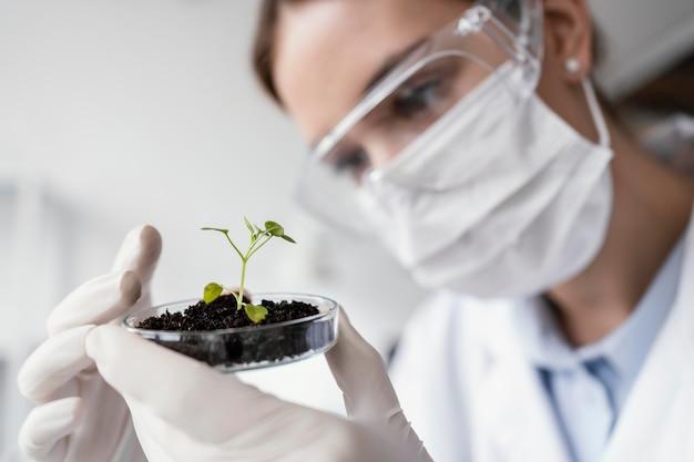 Close-up cientista com planta