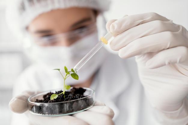 Close-up cientista regando planta