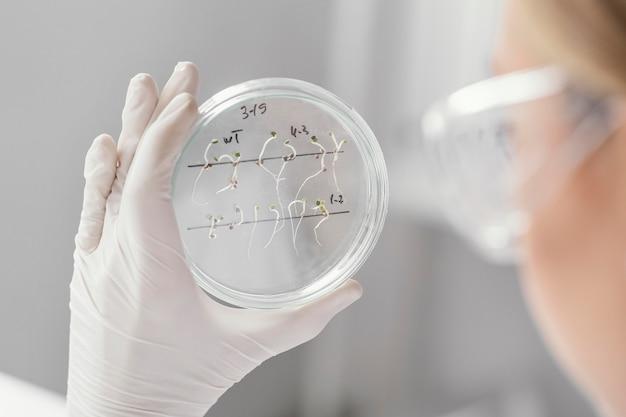 Close-up cientista segurando uma placa de petri