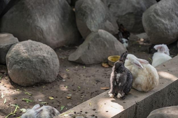 Close up cutie coelho em wat pra putthabat phu kwai ngoen no distrito de chiang khan loei tailândia. templo do coelho de chiang khan ou wat pra putthabat phu kwai ngoen