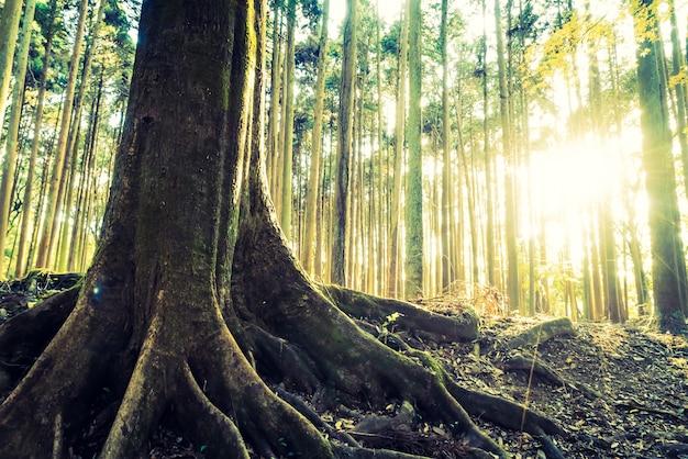 Close-up da árvore com as suas raízes