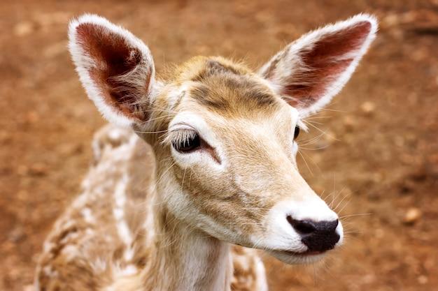 Close-up da cabeça de veado jovem