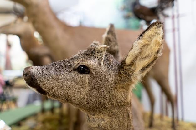 Close-up da cabeça de veado.