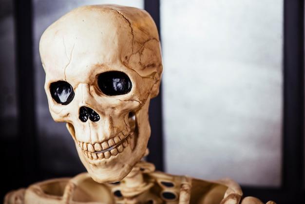 Close-up da cabeça do esqueleto