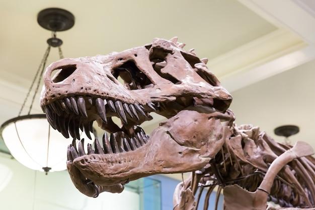 Close up da cabeça do tiranossauro.