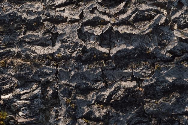 Close-up da casca de árvore. superfície natural texturizada