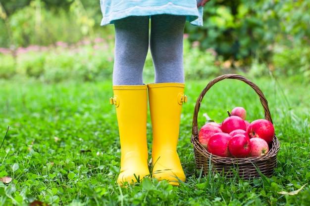 Close up da cesta com maçãs vermelhas e botas de borracha na menina