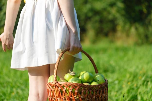 Close up da cesta do vintage com as maçãs orgânicas nas mãos da mulher. colheita do jardim. verão. ao ar livre. mulher segurando uma grande cesta de frutas. estilo de vida saudável e alimentação.