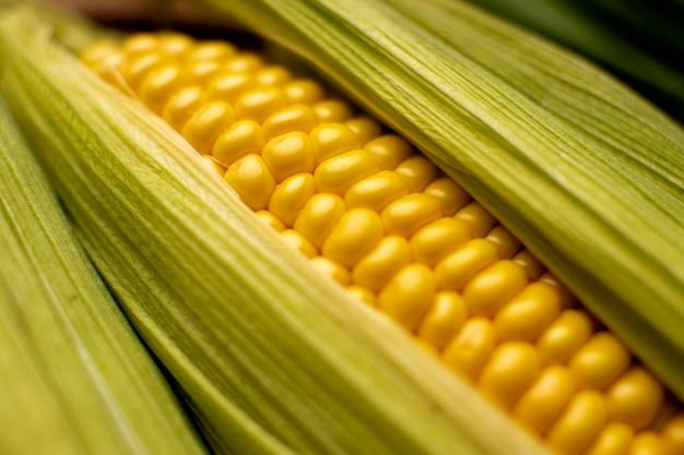 Close-up da composição do milho em ângulo alto