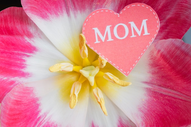 Close-up da flor com coração para o dia das mães