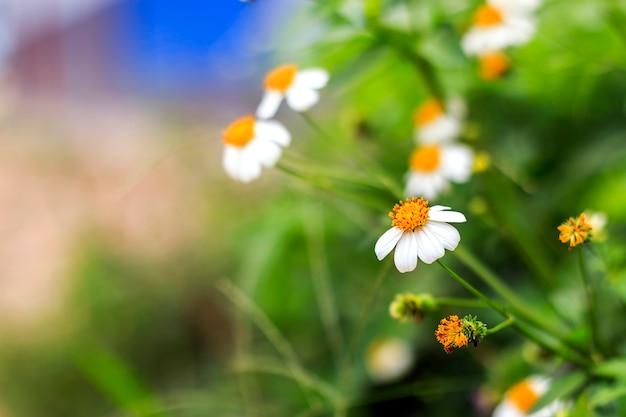 Close up da flor da grama com foco macio e sobre a luz no fundo