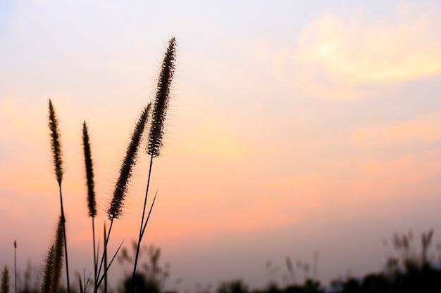 Close up da flor da grama com macio-foco no fundo. sobre a luz