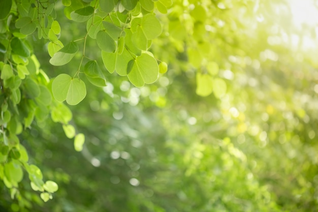 Close-up da folha de árvore de orquídea verde vista natureza no fundo desfocado vegetação