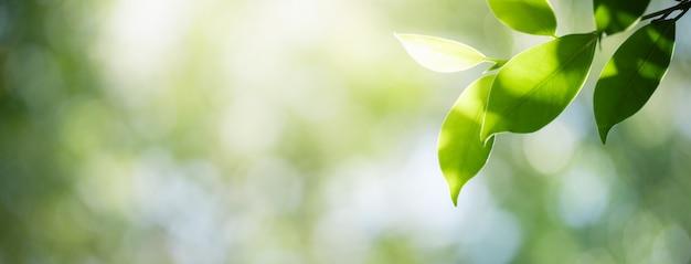 Close-up da folha verde da natureza no fundo borrado da vegetação.