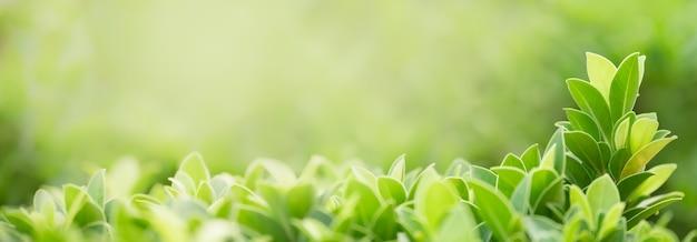 Close-up da folha verde da natureza no fundo da vegetação turva com bokeh e cópia espaço usando como conceito de página de capa do fundo.