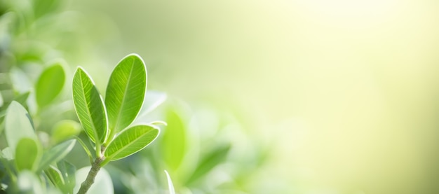 Close-up da folha verde da natureza no fundo da vegetação turva no jardim com bokeh e cópia espaço usando como conceito de página de capa do fundo.