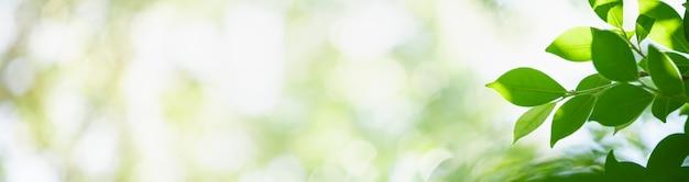 Close-up da folha verde da natureza no fundo da vegetação turva no jardim.