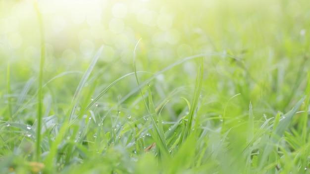 Close up da folha verde no fundo borrado no jardim