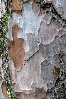 Close-up da macro de textura de pele de pinheiro
