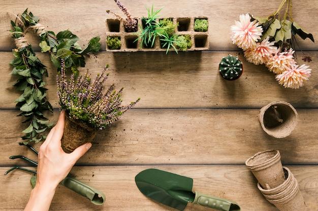 Close-up da mão de uma pessoa segurando a planta com equipamentos de jardinagem; flor; pote de turfa; bandeja de turfa na mesa de madeira