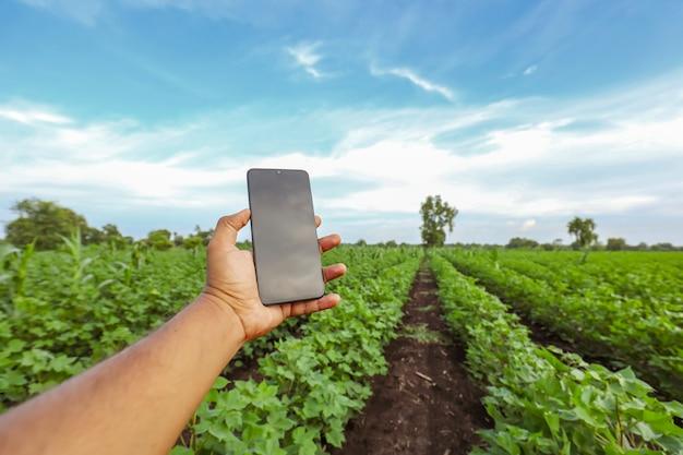 Close-up da mão masculina, segurando o telefone móvel no campo da agricultura