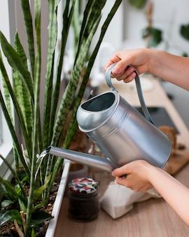 Close-up da mulher regando as plantas da casa