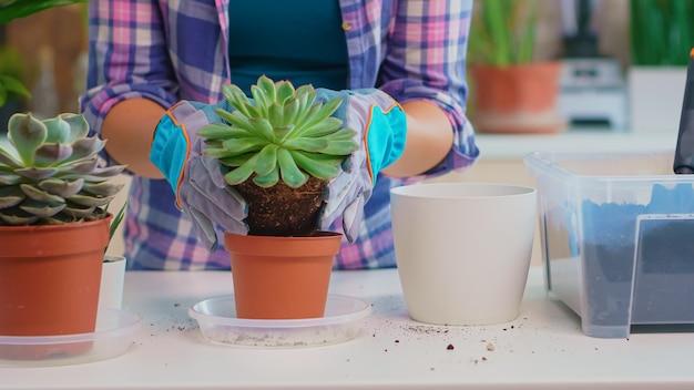 Close-up da mulher replantando a planta de casa na cozinha. segurando uma flor suculenta na câmera, plantando em um vaso de cerâmica usando uma pá, luvas, solo fértil e flores para a decoração da casa.