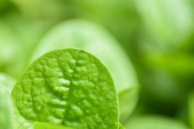 Close-up da natureza folhas verdes no jardim com foco suave e desfocar a folha
