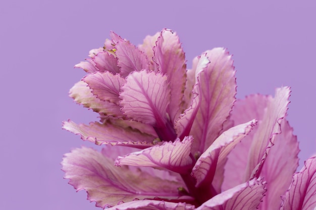 Close-up da planta da primavera