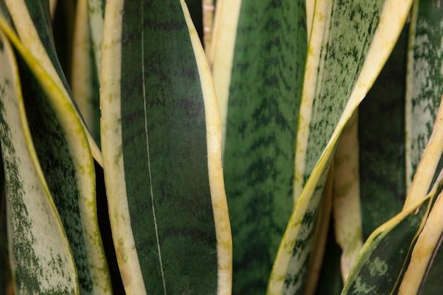 Close-up da planta verde com detalhes amarelos