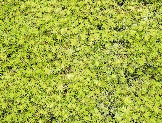 Close up da planta verde fresca.
