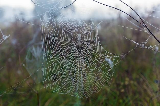Close up da teia de aranhaa foto do close da grande teia de aranha com o galho e o brilhante Foto Premium