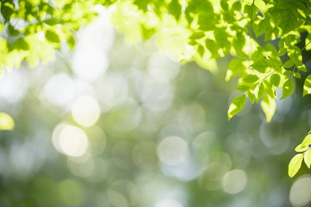 Close-up da visão da natureza da folha verde sobre fundo verde borrado com espaço de cópia.