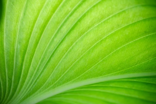 Close-up da visão da natureza da folha verde sobre fundo verde borrado.