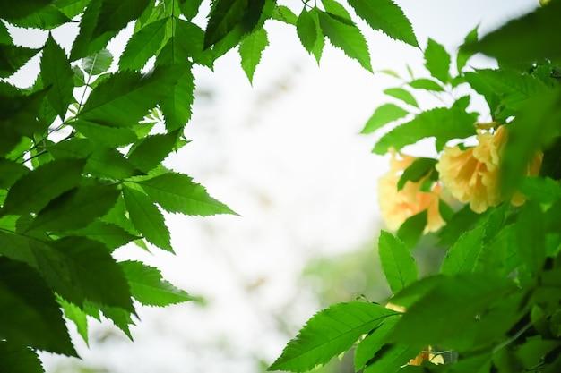 Close-up da vista da natureza da folha verde no fundo desfocado da vegetação