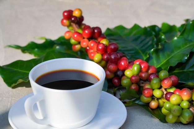 Close-up da xícara de café branca com fundo de concreto e grãos de café crus no sol da manhã.