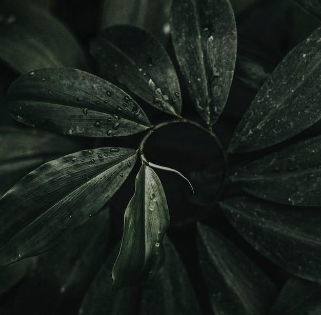 Close up das folhas de palmeira da área