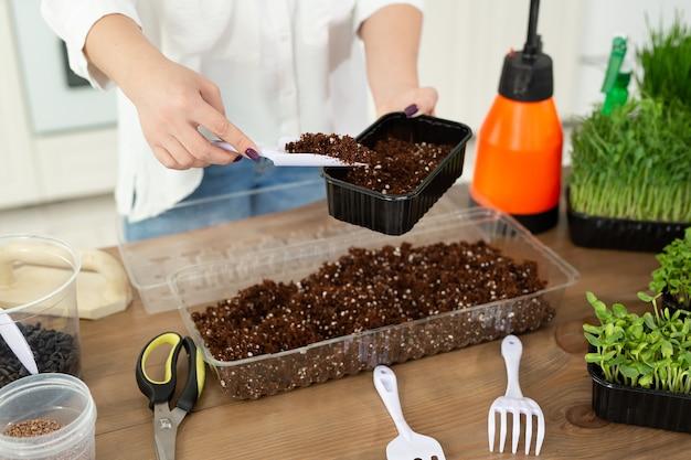 Close-up das mãos de uma mulher, um agricultor está despejando solo, terra em uma bandeja para o plantio de micro-sementes verdes.