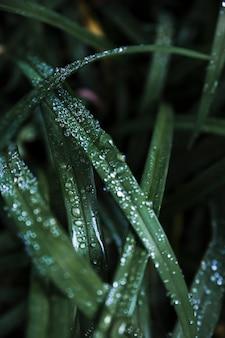 Close-up de água na grama