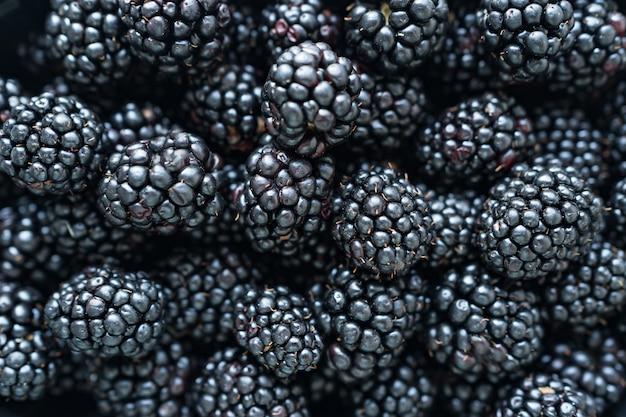 Close up de amoras-pretas brilhantes recém-colhidas.