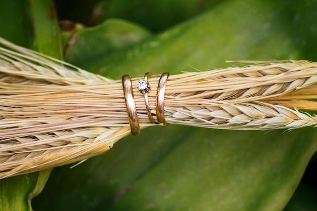 Close-up, de, anéis casamento, em, a, orelhas, de, trigo