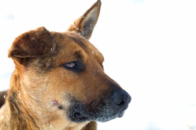 Close-up de animal de estimação cão amarelo na neve branca ao ar livre