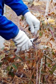 Close up de arbusto de poda