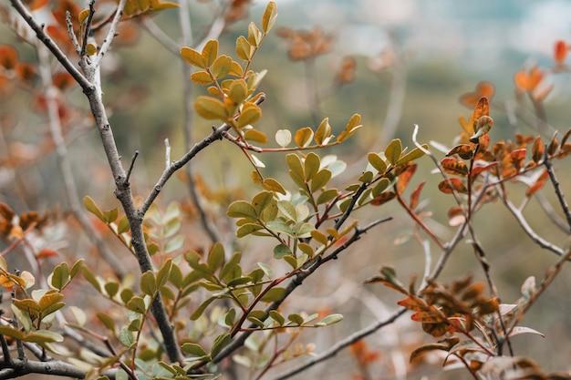 Close-up, de, árvore sai, em, a, floresta