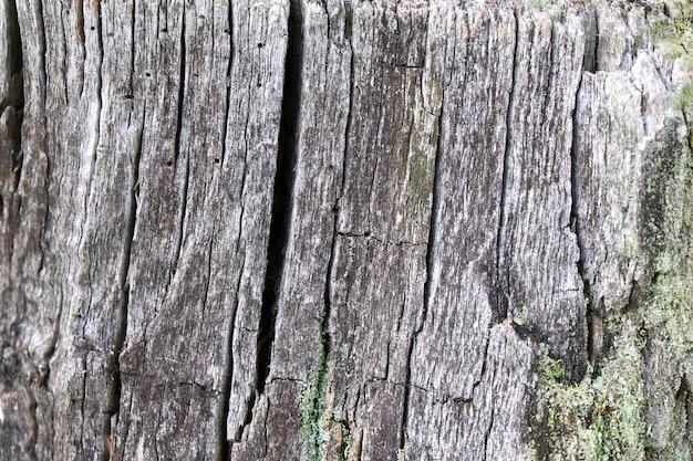 Close-up de árvore velha, fundo de madeira