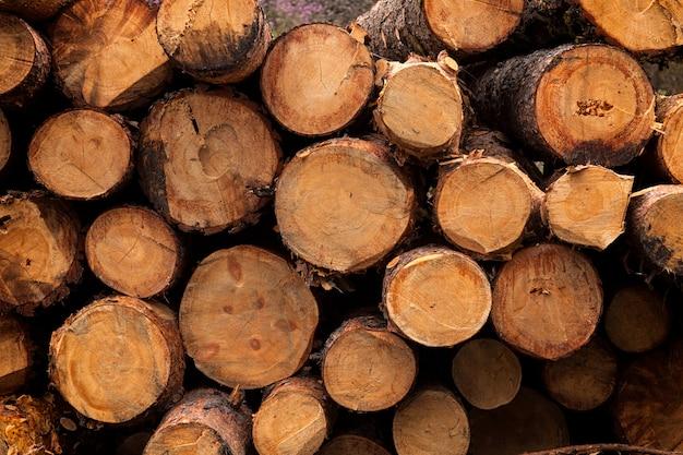 Close-up de árvores coníferas serradas, vista lateral, textura de madeira