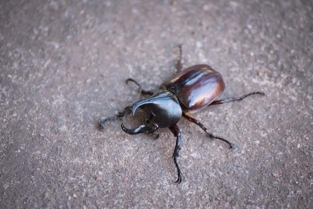Close-up de besouro de hércules no chão