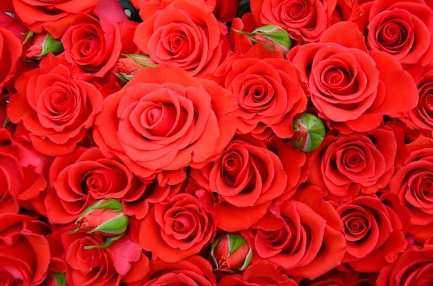 Close-up de brilhante buquê de rosas vermelhas lindas e frescas